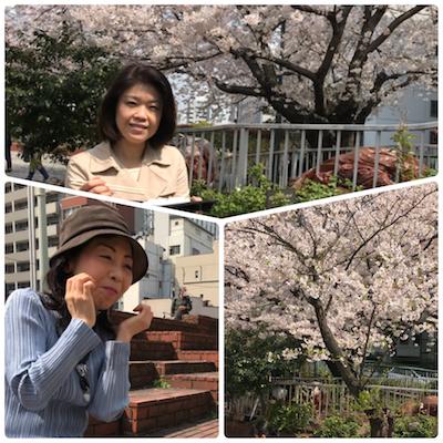 桜にうっとりする理由
